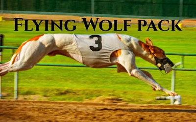 飞狼 Flying Wolf Pack,104C 65122